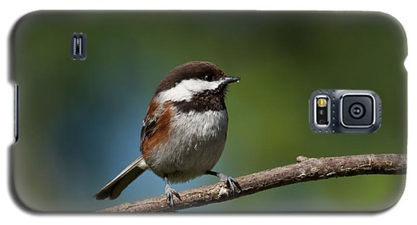Chestnut Backed Chickadee Perched On A Branch Galaxy S5 Case