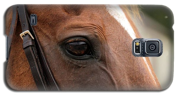 Chestnut Horse Eye Galaxy S5 Case