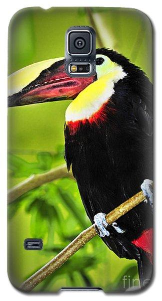 Toucan Galaxy S5 Case - Chestnut Mandibled Toucan by Elena Elisseeva