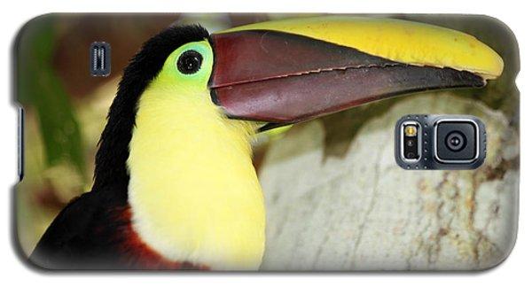 Chestnut Mandibled Toucan Galaxy S5 Case