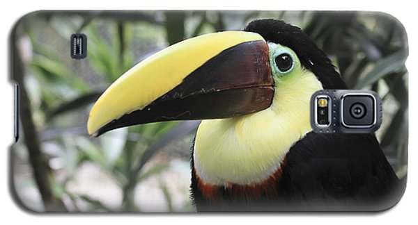 Galaxy S5 Case featuring the photograph Chestnut-mandibled Toucan by Teresa Zieba