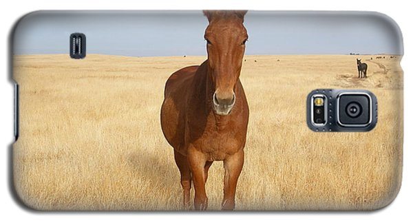 Chestnut Mule In Gold Galaxy S5 Case