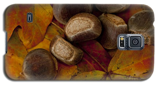 Chestnuts And Fall Leaves Galaxy S5 Case