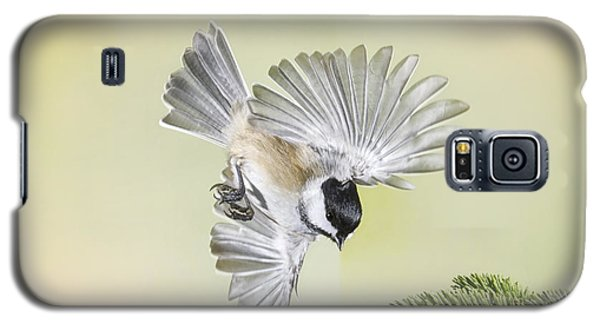 Chickadee And Cone Galaxy S5 Case