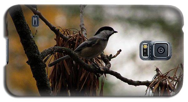 Chickadee In A Tree Galaxy S5 Case