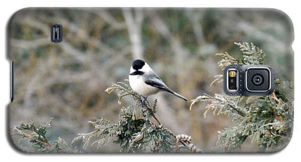 Galaxy S5 Case featuring the photograph Chickadee In Cedar by Brenda Brown