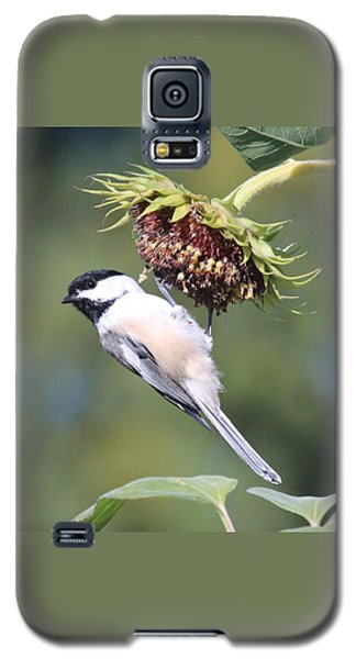 Chickadee On Sunflower Galaxy S5 Case by Lucinda VanVleck