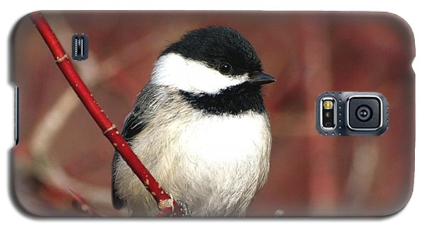 Galaxy S5 Case featuring the photograph Chickadee by Susan  Dimitrakopoulos