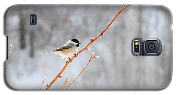 Chickadee Galaxy S5 Case