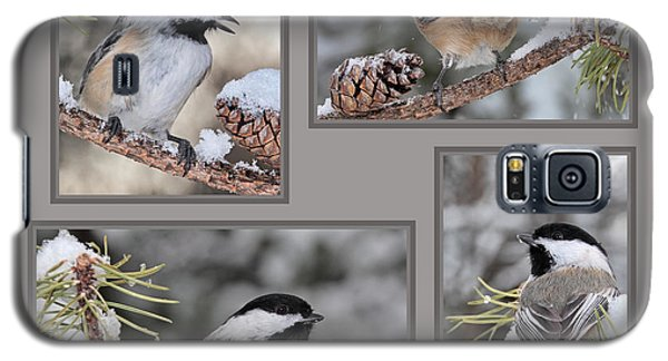 Chickadees In Winter Galaxy S5 Case