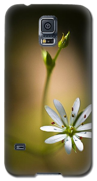 Chickweed Blossom And Bud Galaxy S5 Case by Marty Saccone