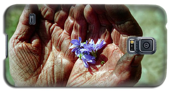 Chicory Flowers In Peasants' Hands Galaxy S5 Case by Emanuel Tanjala