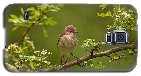 Galaxy S5 Case featuring the photograph Chiffchaff by Paul Scoullar