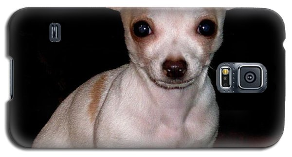 Galaxy S5 Case featuring the photograph Chihuahua Puppy by Maria Urso