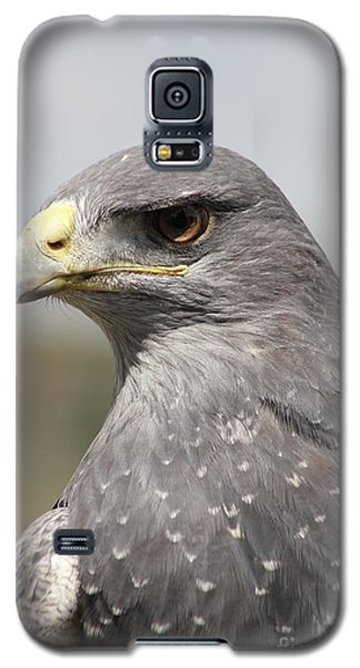 Chilean Eagle Galaxy S5 Case