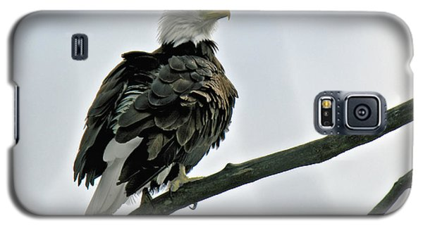 Galaxy S5 Case featuring the photograph Chilkat River Bald Eagle by Stephen  Johnson