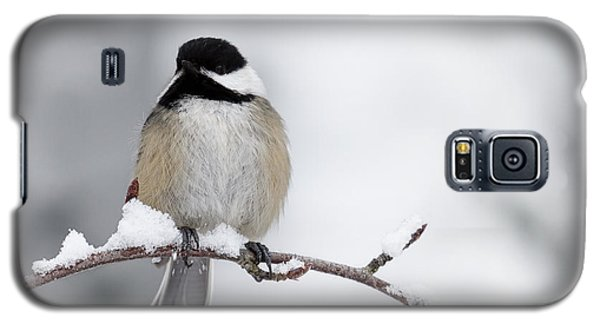 Chim Chim Chickadee Galaxy S5 Case