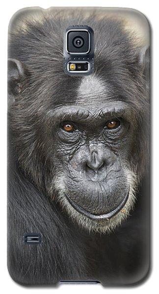 Chimpanzee Portrait Ol Pejeta Galaxy S5 Case by Hiroya Minakuchi