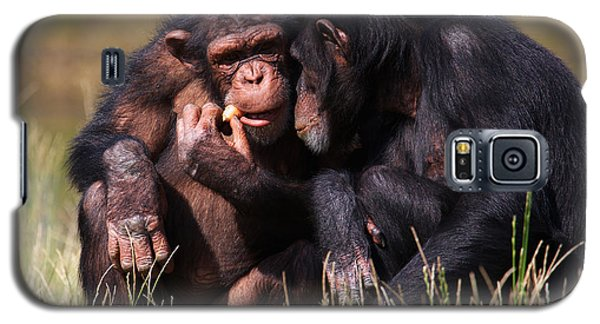 Chimpanzees Eating A Carrot Galaxy S5 Case by Nick  Biemans