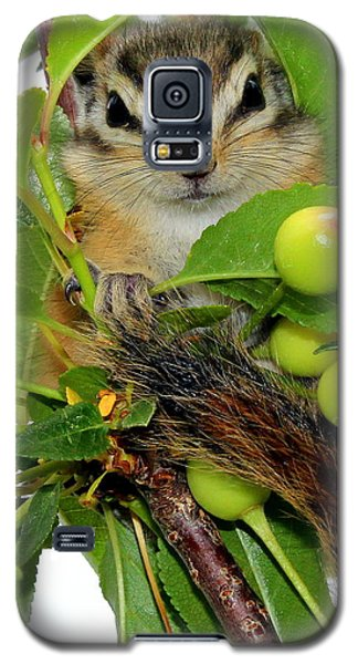 Galaxy S5 Case featuring the photograph Chip Or Dale by Barbara Chichester