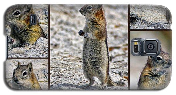 Chipmunk Collage Galaxy S5 Case by Lynn Bolt