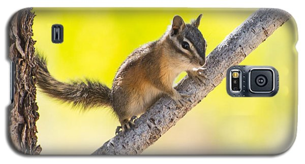 Galaxy S5 Case featuring the photograph Chipmunk In Tree by Janis Knight