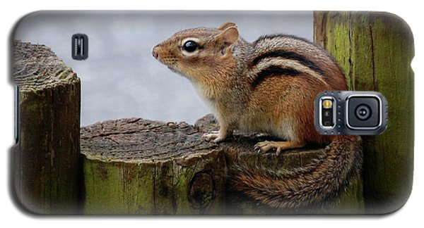 Galaxy S5 Case featuring the photograph Chipmunk by Kathy Gibbons