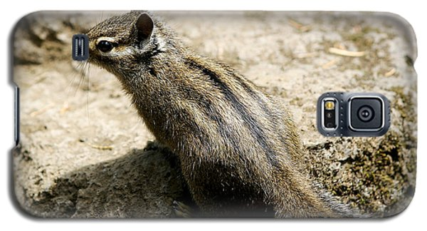 Chipmunk On A Rock Galaxy S5 Case by Belinda Greb