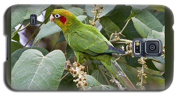 Chiriqui Conure 2 Galaxy S5 Case by Heiko Koehrer-Wagner