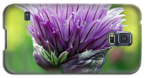 Chive Blossom Galaxy S5 Case
