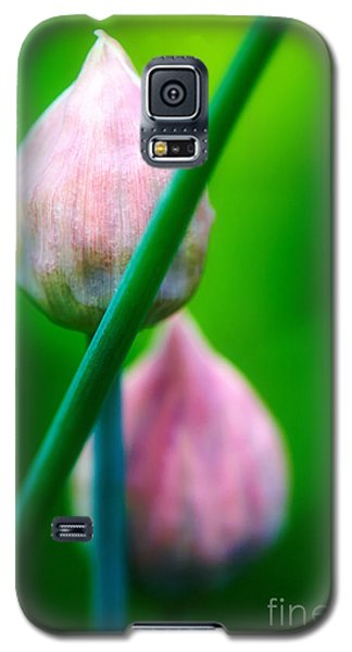 Galaxy S5 Case featuring the photograph Chive Buds by Nick  Biemans