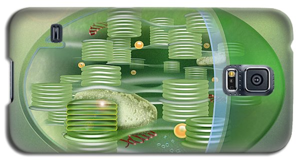 Chloroplast - Basis Of Life - Plant Cell Biology - Chloroplasts Anatomy - Chloroplasts Structure Galaxy S5 Case