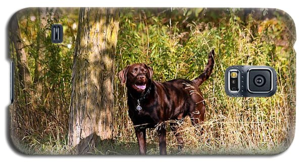Chocolate Lab Cuteness Galaxy S5 Case