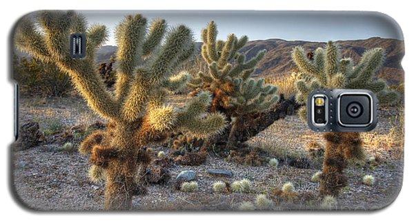 Cholla Cactus Galaxy S5 Case