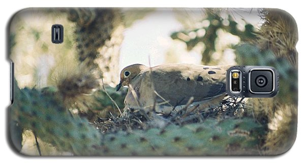 Cholla Dove Galaxy S5 Case
