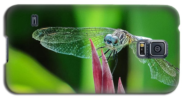 Galaxy S5 Case featuring the photograph Chomped Wing Squared by TK Goforth