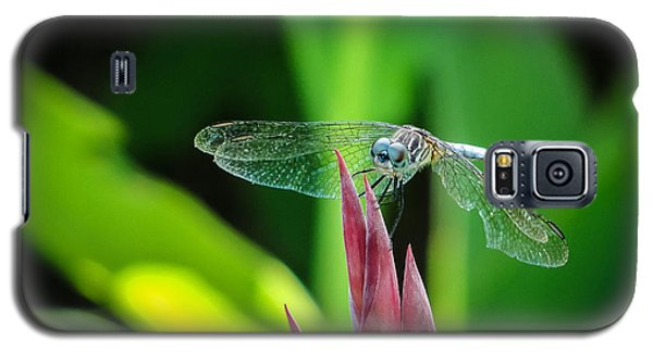 Galaxy S5 Case featuring the photograph Chomped Wing by TK Goforth