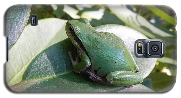 Galaxy S5 Case featuring the photograph Chorus Frog On A Rhodo by Cheryl Hoyle