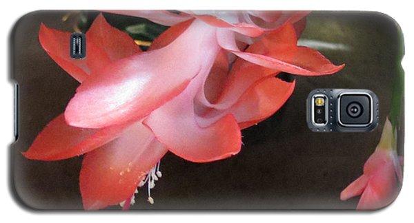 Christmas Cactus Bloom Galaxy S5 Case