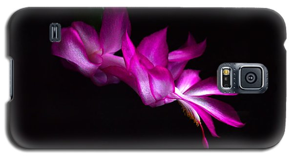 Galaxy S5 Case featuring the photograph Christmas Cactus Blossom by Bill Swartwout