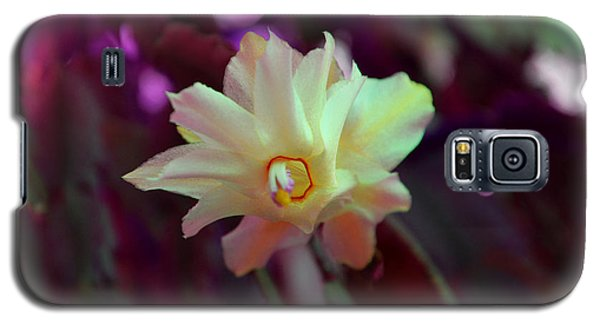 Galaxy S5 Case featuring the photograph Christmas Cactus Flower by Ramona Matei