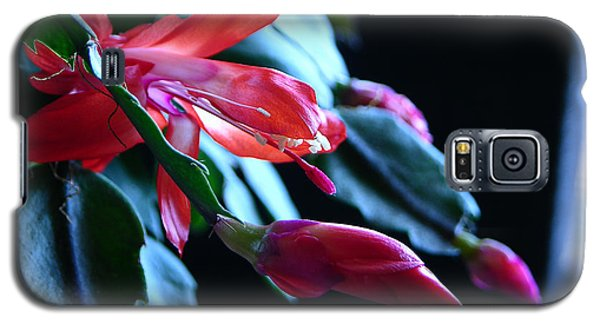 Christmas Cactus In Bloom Galaxy S5 Case