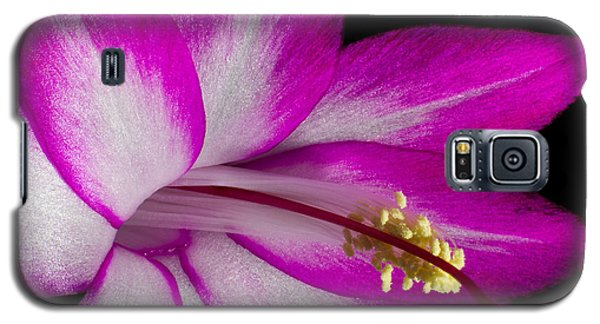 Christmas Cactus Galaxy S5 Case