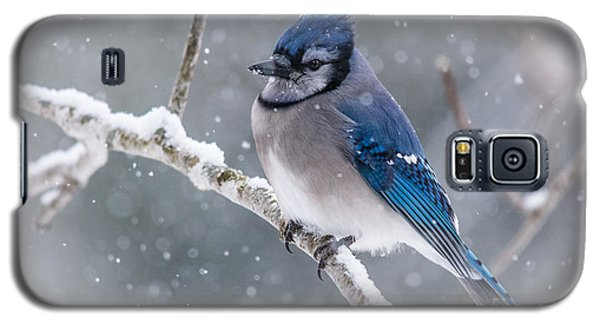 Christmas Card Bluejay Galaxy S5 Case