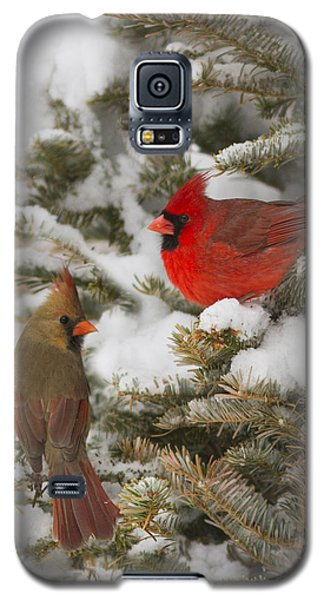 Christmas Card With Cardinals Galaxy S5 Case by Mircea Costina Photography
