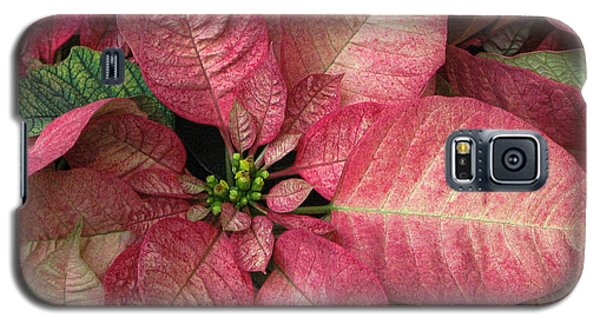 Galaxy S5 Case featuring the photograph Christmas Flower by Tammy Espino