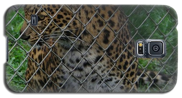 Christmas Leopard I Galaxy S5 Case