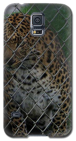 Christmas Leopard II Galaxy S5 Case