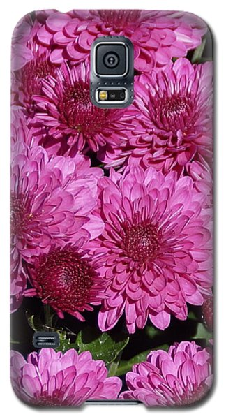 Chrysanthemum 1 Galaxy S5 Case