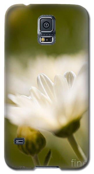 Chrysanthemum Flowers Galaxy S5 Case